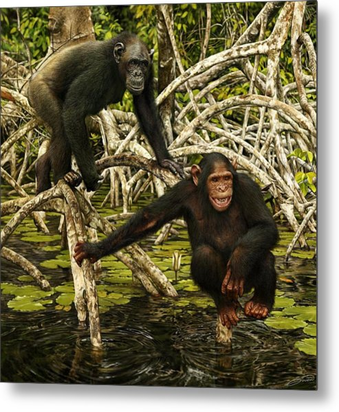 Chimpanzees In Mangrove Metal Print by Owen Bell