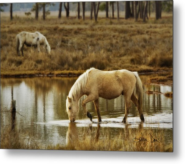 Chincoteague Gold Metal Print