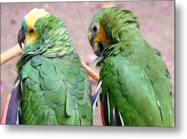 Chit And Chat 2 Metal Print by Van Ness