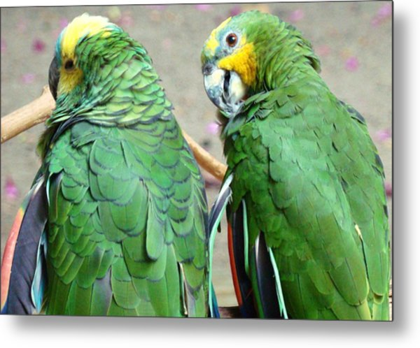 Chit And Chat Metal Print by Van Ness