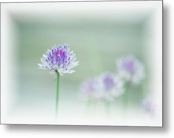 Chives Blowing In The Wind Metal Print