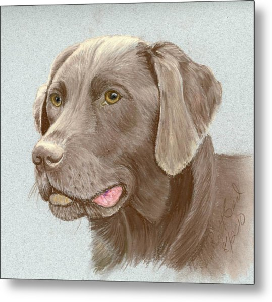 Chocolate Labrador Retriever Metal Print