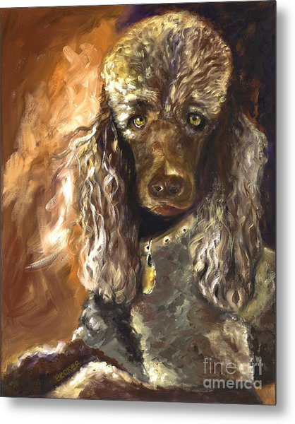Chocolate Poodle Metal Print