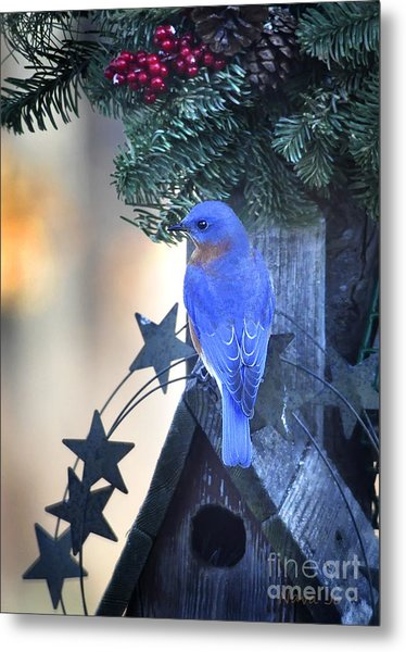 Christmas Bluebird Metal Print