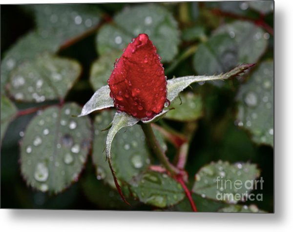 Christmas Bud Metal Print