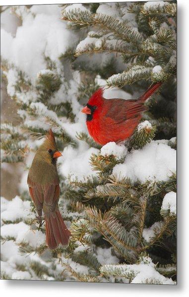 Christmas Card With Cardinals Metal Print