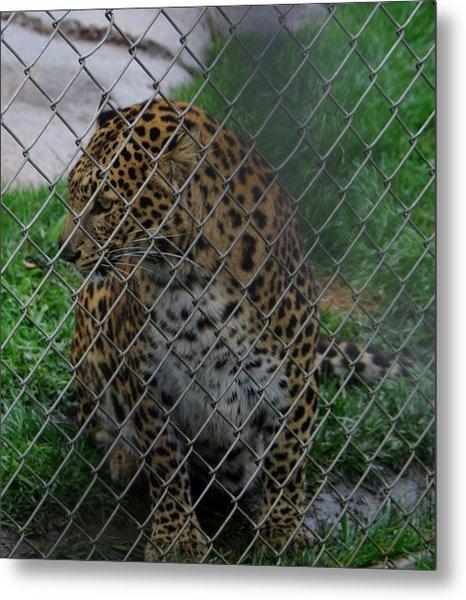 Christmas Leopard I Metal Print