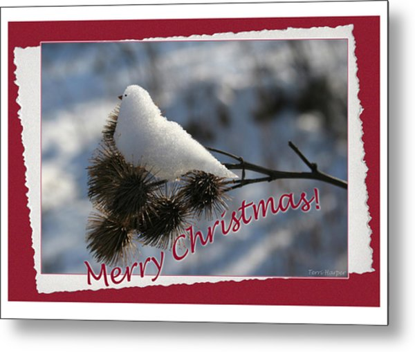 Christmas Snow Bird Metal Print