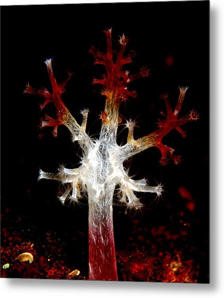 Christmas Metal Print by Sok wan andy Yeo