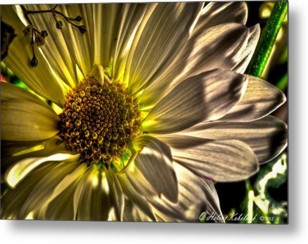 Chrysanthemum Metal Print by Helene Kobelnyk
