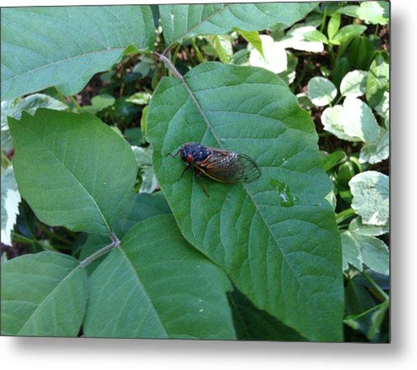 Cicada Invasion Metal Print
