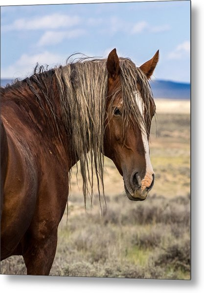 Cimarron - Wild Mustang Stallion Metal Print