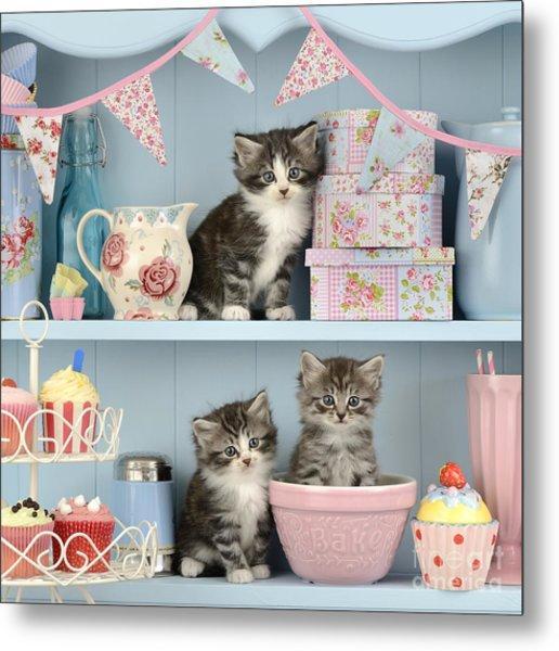 Baking Shelf Kittens Metal Print