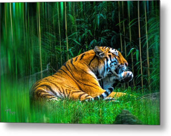 Clean Claws Metal Print