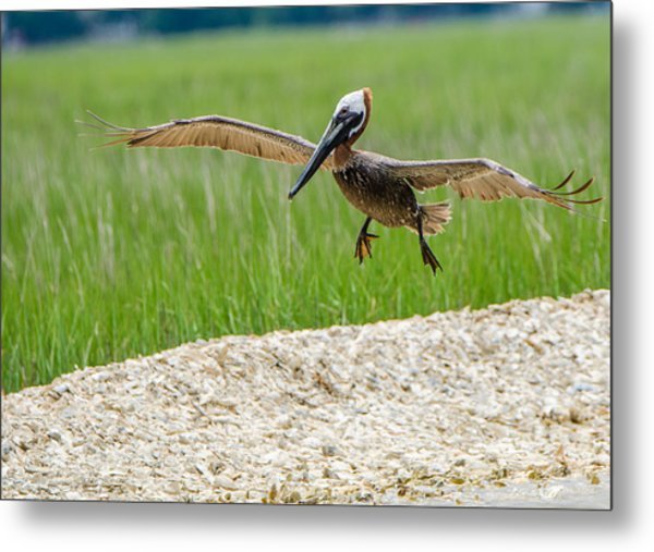 Clear For Landing Metal Print