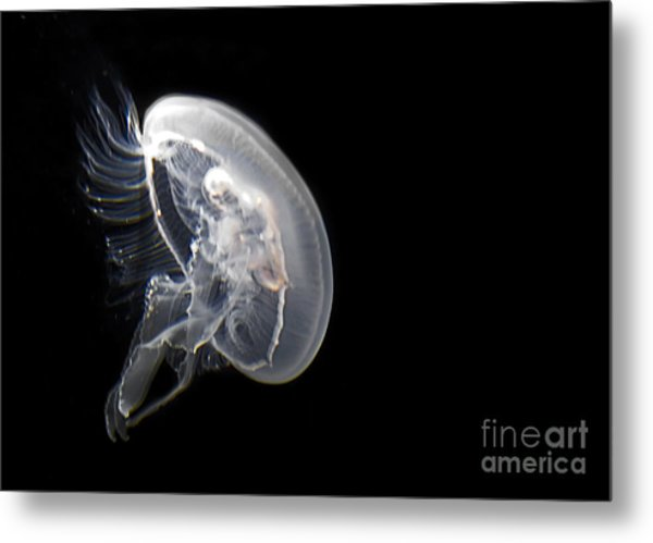 Clear Jelly Fish In Dark Water Art Prints Metal Print