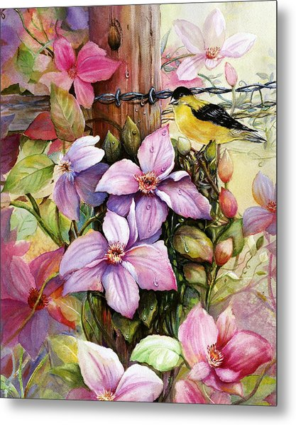 Clematis Vine And Goldfinch Metal Print