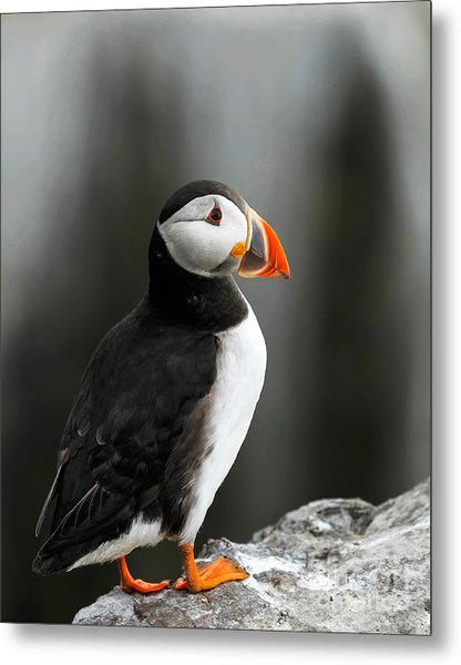 Cliff Top Puffin Metal Print