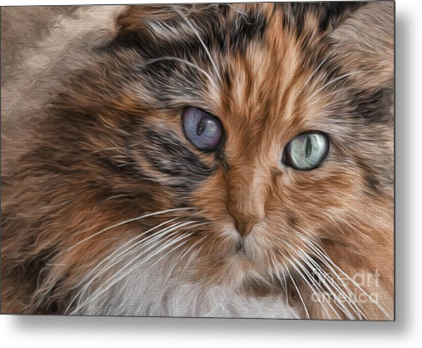 Cloe Kitty Metal Print