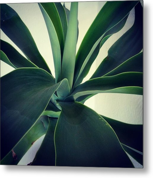 Close-up Of Agave Plant Metal Print by Antonio Trogu / Eyeem
