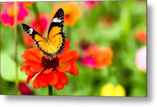 Close-up Of Butterfly On Orange Flower Metal Print by Mongkol Nitirojsakul / Eyeem