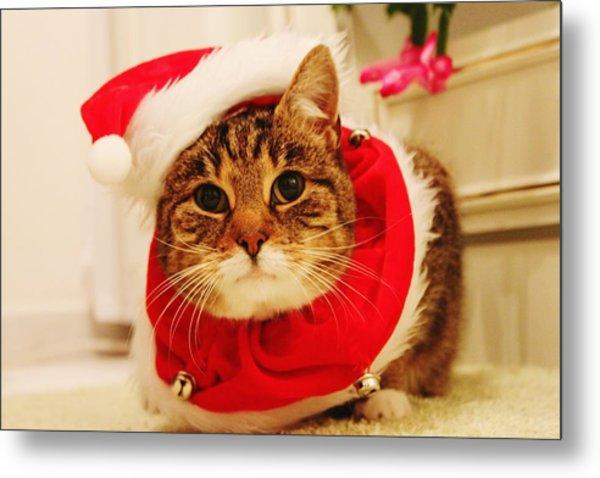 Close-up Of Christmas Cat Metal Print by Gregor Bleul / Eyeem