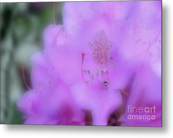 Close Up Of Rhododendron Flower Metal Print by Dan Friend