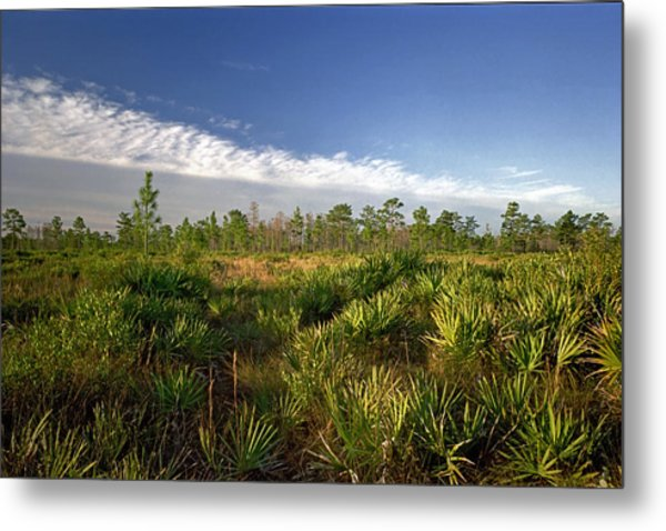 Cloud Line And Palmetto. Triple N Ranch.   Metal Print