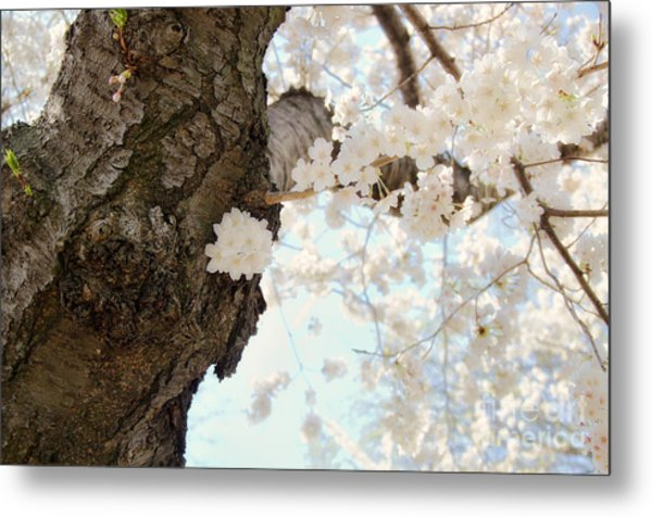 Cloud Of Petals Metal Print