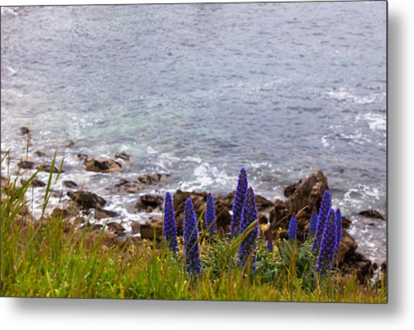 Coastal Cliff Flowers Metal Print