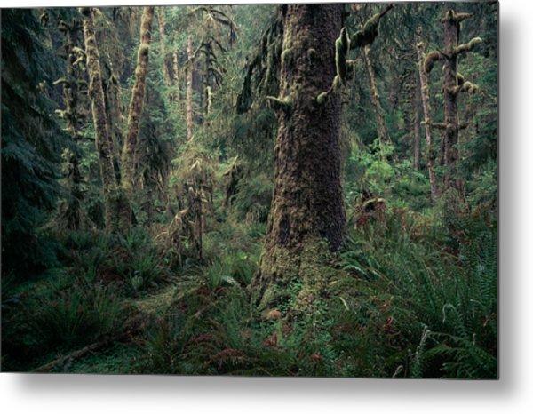 Coastal Forest 3 Metal Print