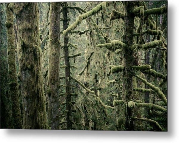 Coastal Forest Metal Print