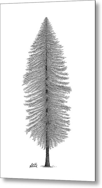 Coastal Redwood Metal Print