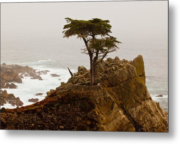 Coastline Cypress Metal Print