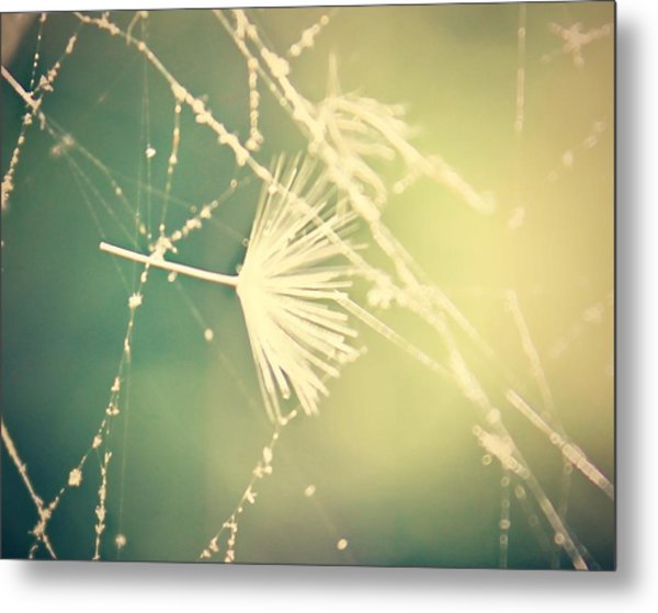 Cobweb Dandelion Seed Metal Print