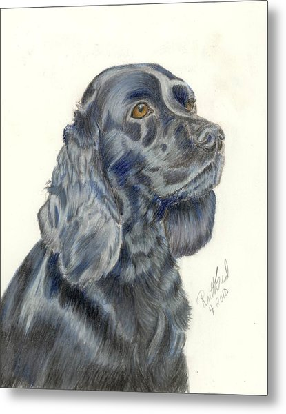 Cocker Spaniel Metal Print