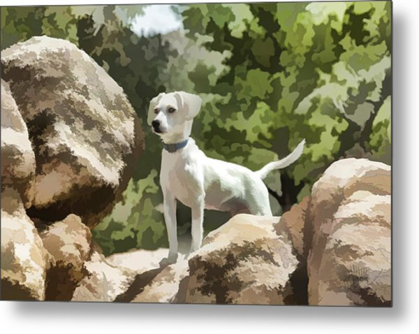 Cody On The Rocks Metal Print