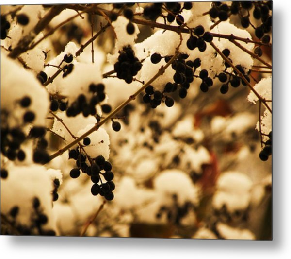 Cold Berries Metal Print by Christian Rooney