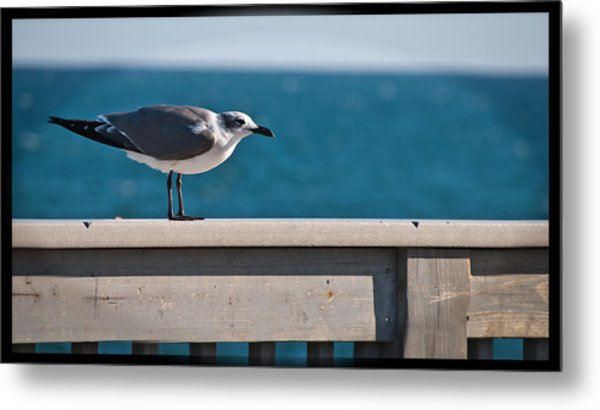 Cold Gull Metal Print