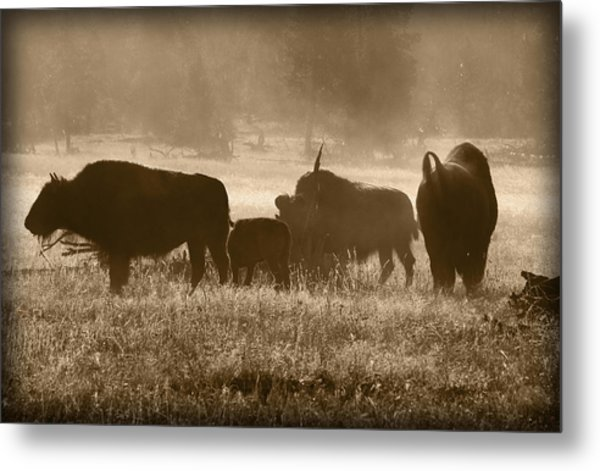 Cold Misty Morning Metal Print