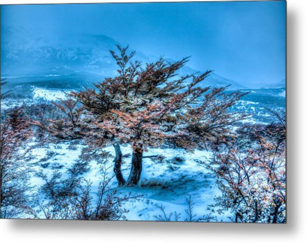 Cold Morning Metal Print by Roman St