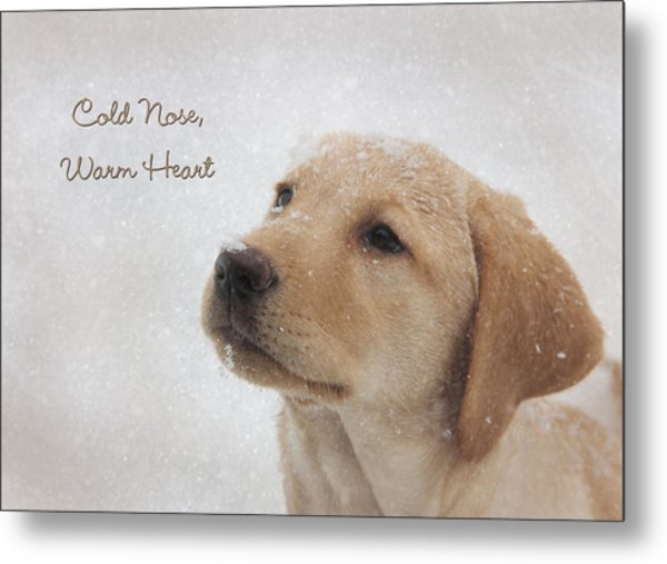 Cold Nose Warm Heart Metal Print