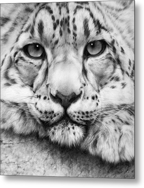 Cold Stare - Drawing Metal Print
