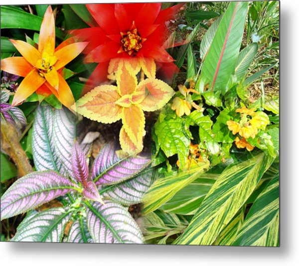 Collage Of Tropical Colors Metal Print by Van Ness
