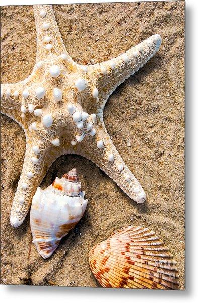 Collecting Shells Metal Print