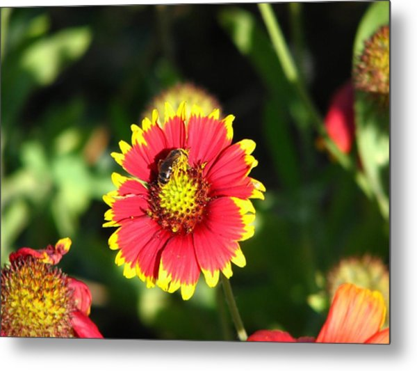 Collecting Too Metal Print by Peggy Burley