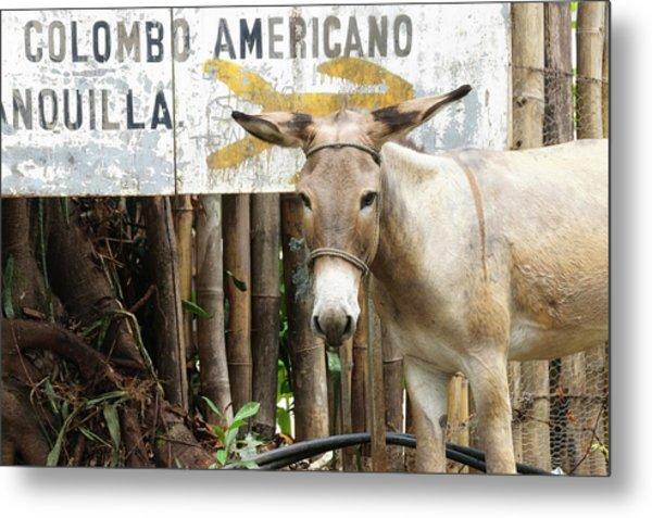 Colombia, Minca Mule And Sign Metal Print by Matt Freedman