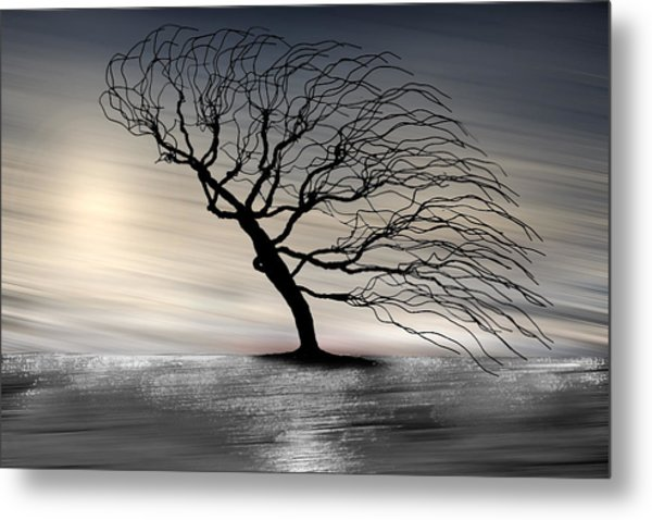 Color Of The Wind Metal Print