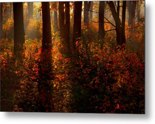 Color On The Forest Floor Metal Print