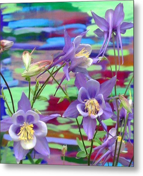 Colorado Columbine Metal Print